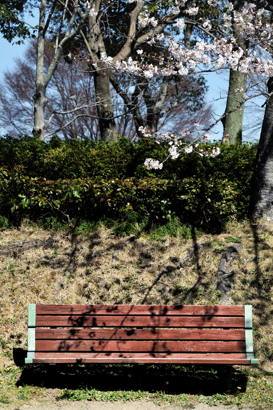 0Shadow of Spring.jpg